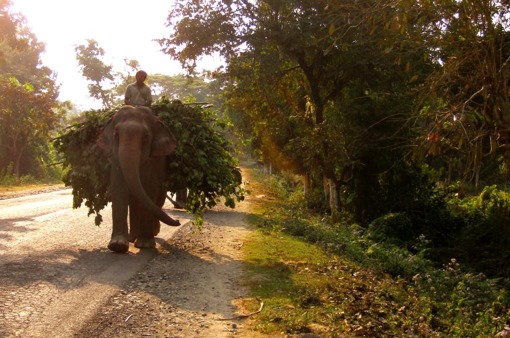 elephantsontheroad