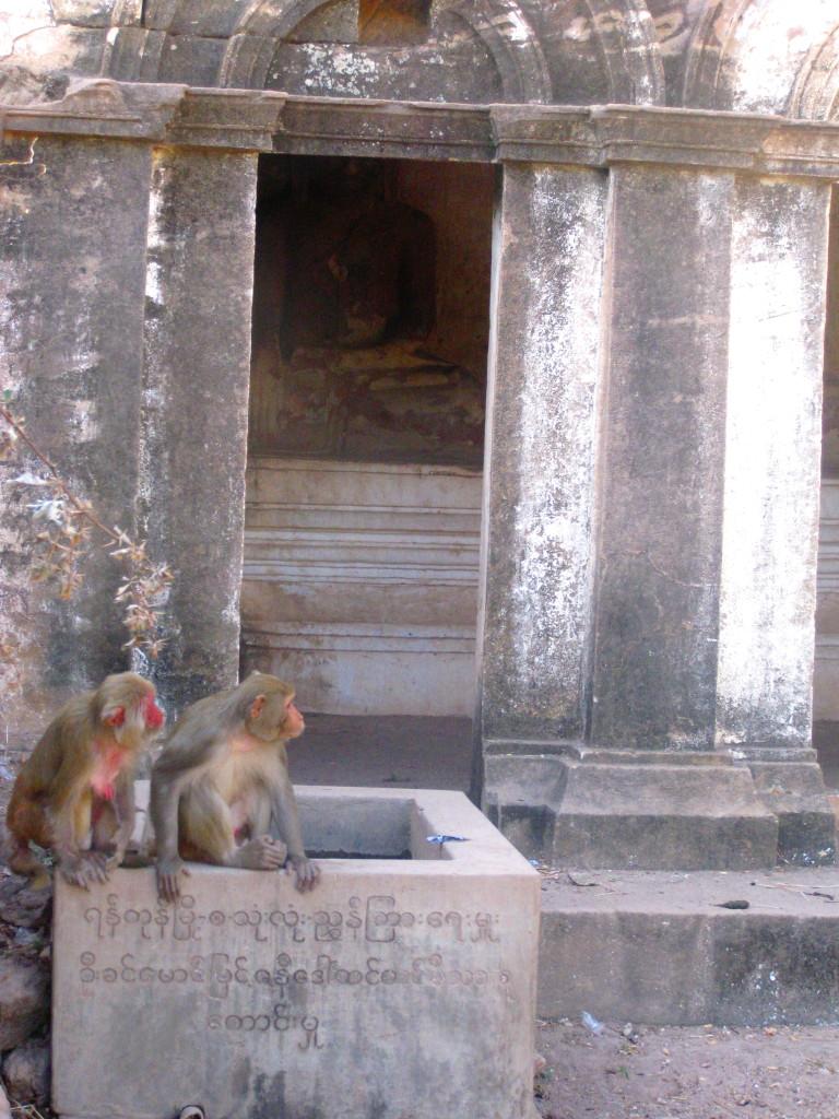 Monywa8 cave monkeys